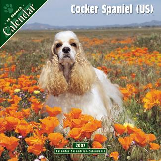 Casey on the cover of a Cocker calendar