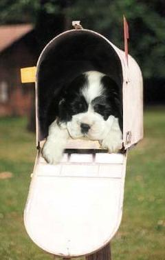 Fake picture of Cocker puppy in mailbox