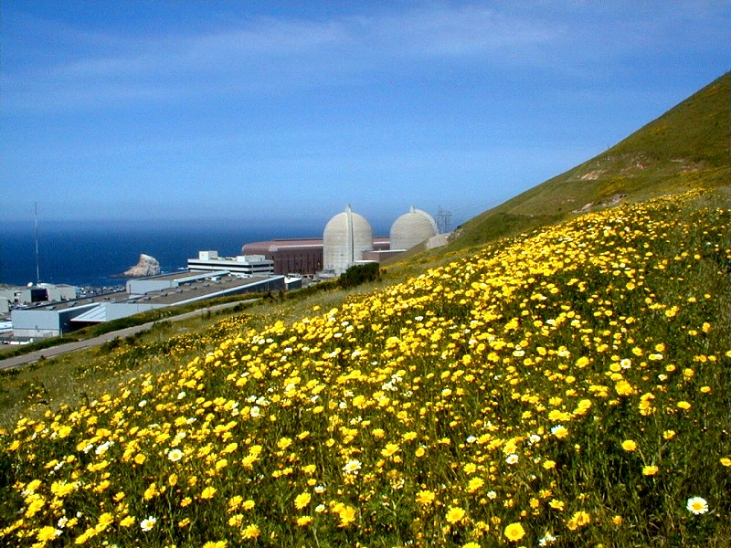 Wildflowers at Diablo Canyon