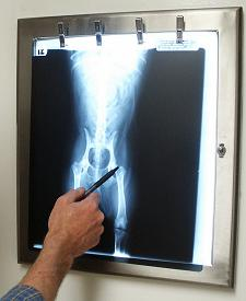 Our Vet Looking At A Hip X-Ray