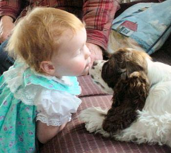 Cocker puppy kissing a baby