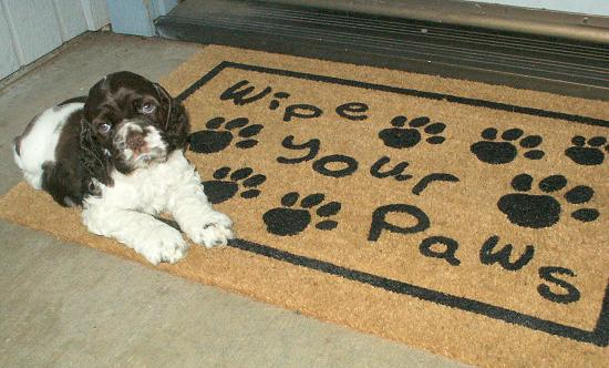 Dog Paw Wipes