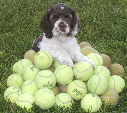 Oreo on a stack of tennis balls