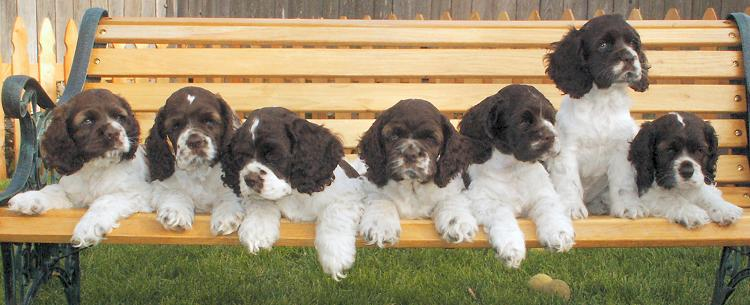 All seven puppies on a bench