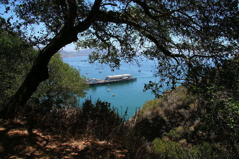 Port San Luis framed by oak trees