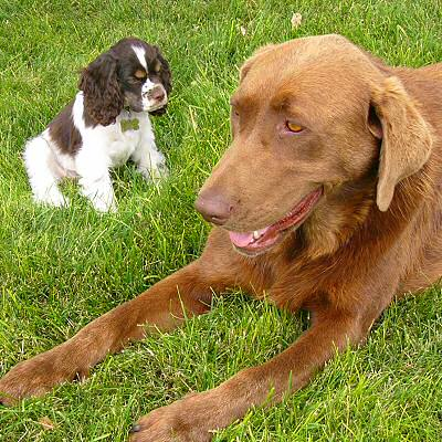 Reese with one of the farm dogs